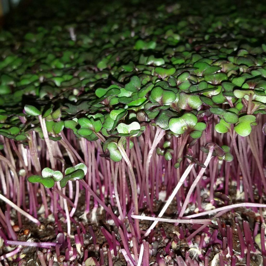 farms utah u0027s own